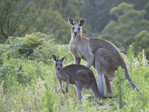 A special message…from Australia's tourist board