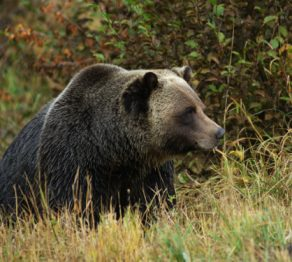 Natural selection … Canada's wilderness