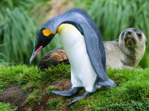 Top 6 places… for penguin spotting