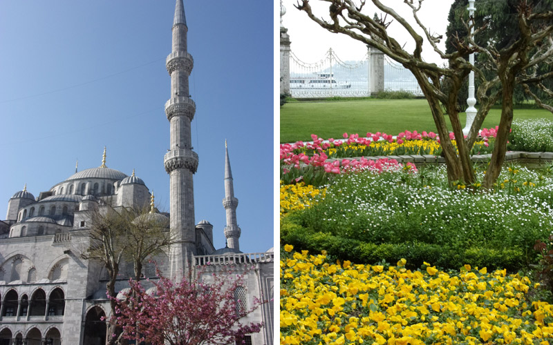 flowers-in-istanbul