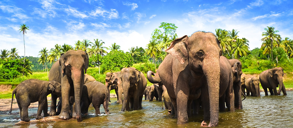 Sri-Lanka-wildlife-tour