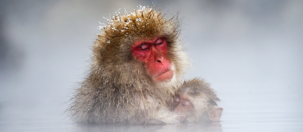 Travel-Photographer-of-the-Year-Snow-monkeys
