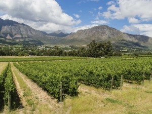 The Cape Winelands are a beautiful place to explore