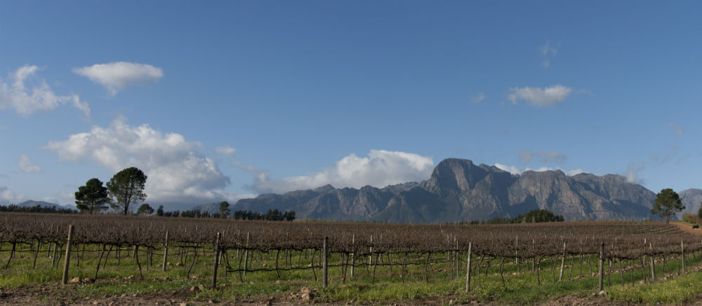 Explore the wonderful wineries of the Western Cape. Photo credit: Thinkstock/ iStock