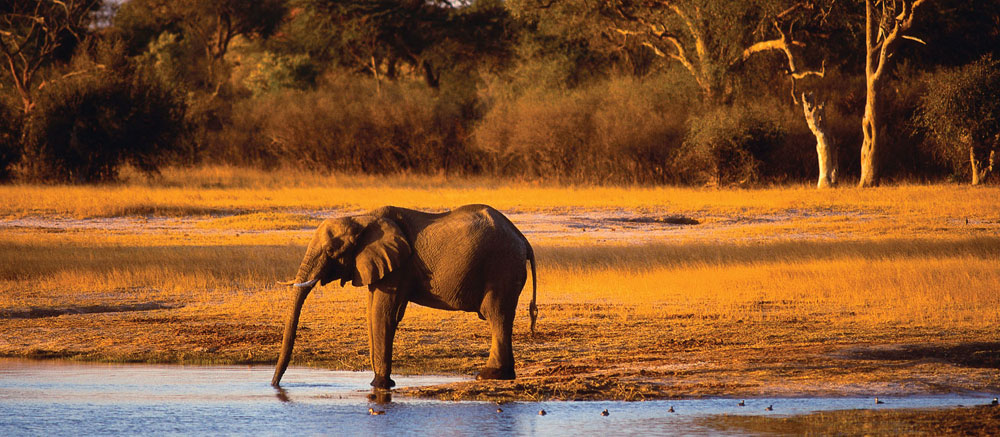 Elephant-at-watering-hole