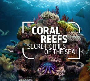 Win tickets to Coral Reefs: Secret Cities of the Sea… at the Natural History Museum