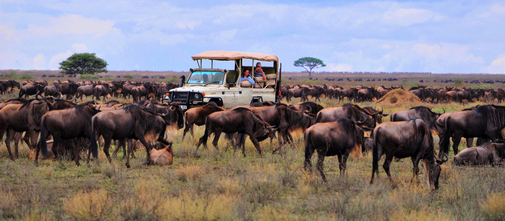 Follow the Great Migration