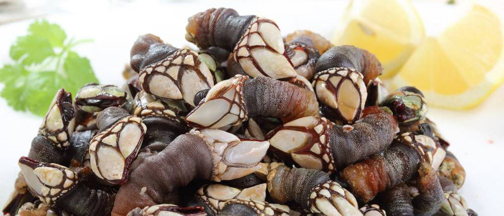 Percebes, boiled goose barnacles, Portugal