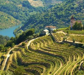 Porto and the Douro valley … top 5 experiences