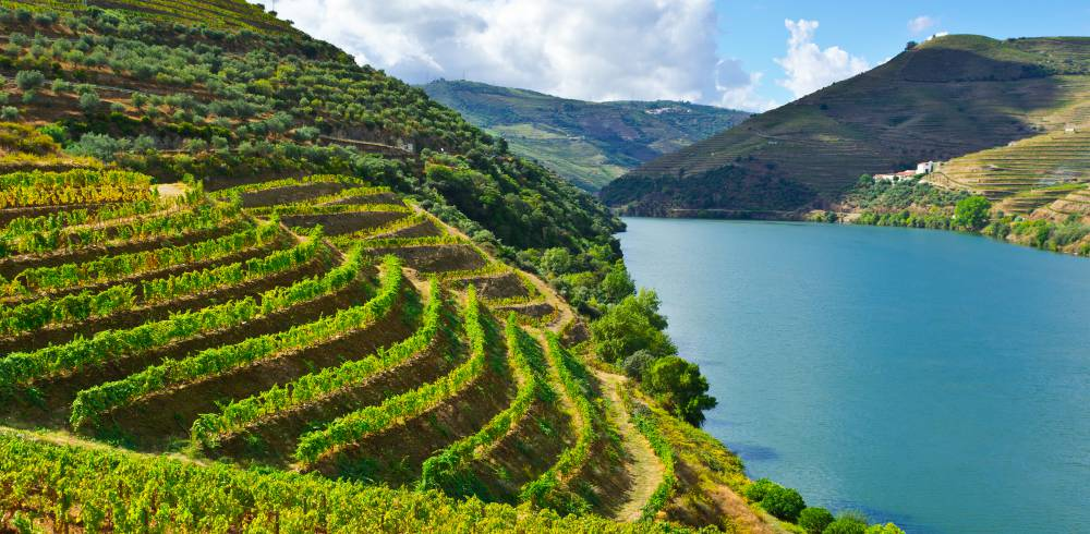 Vineyards in the Valley of the River Douro, Douro Valley, Portugal