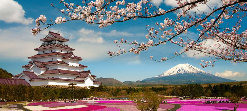 Cherry blossom gardens near Mt Fuji, Japan