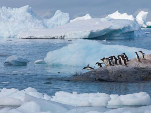 Top 7 things to do… in the Arctic and Antarctica
