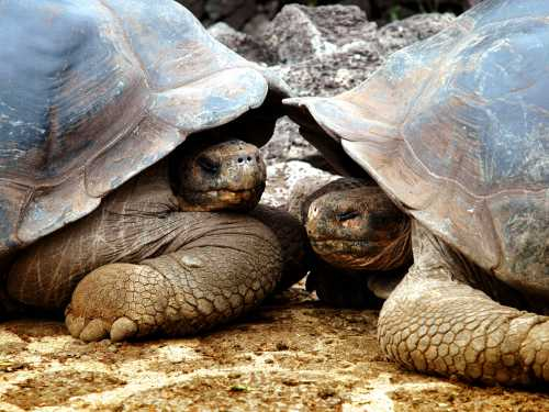 All you need to know about… The Galapagos Islands