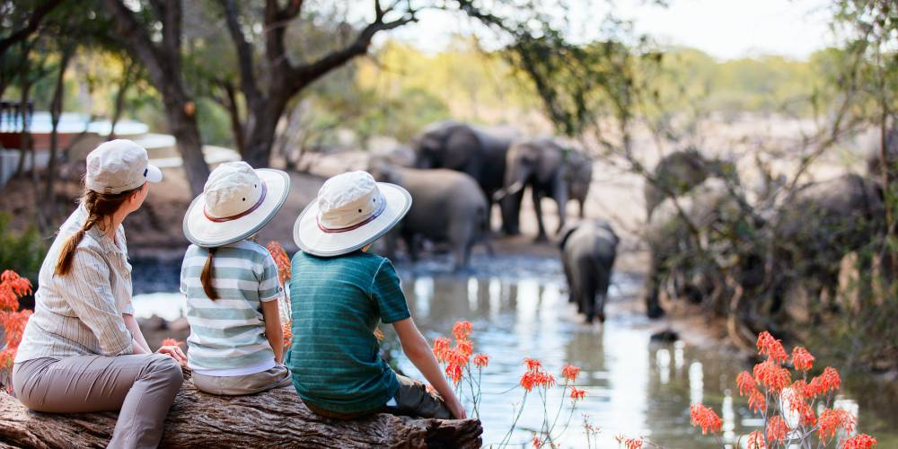 Spotting elephants on safari