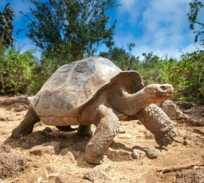 The enchanted islands …of the Galapagos