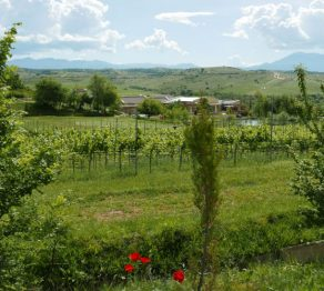 Vines & vistas…Bulgaria's Melnik wine region