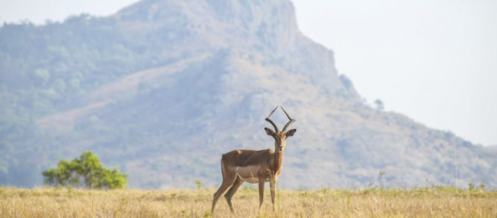 A guide to Swaziland