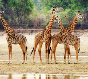 A wildlife odyssey …through Zambia (Part 2)