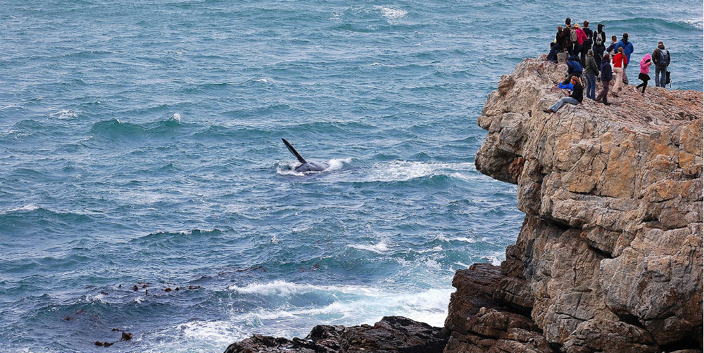 Watching southern right whales from the coast, Hermanus, South Africa
