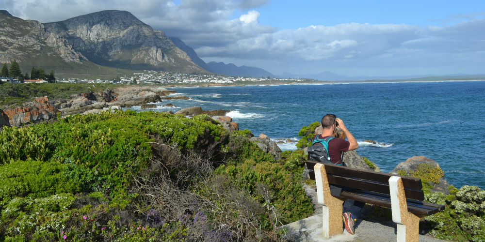 Whale watching from the coastal path, Hermanus, South Africa