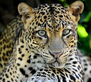 The wildlife of… Sri Lanka
