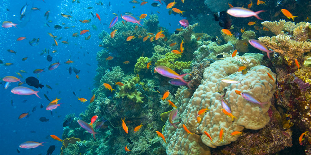 Fish and colourful coral, Great Barrier Reef, Australia