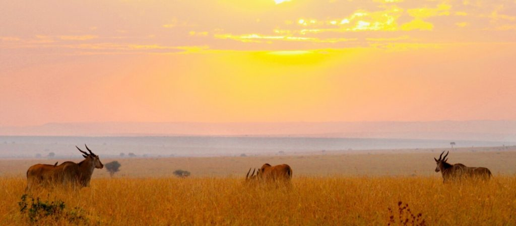 A guide to Kenya