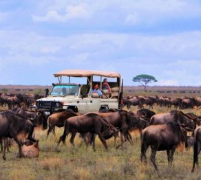 Spot the Great Wildebeest Migration